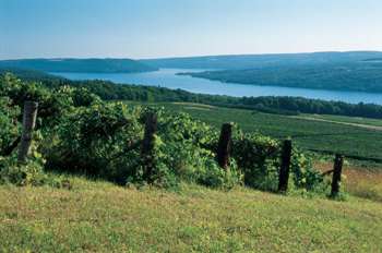 Keuka Lake Vineyard's cooler clime, shorter season and lower light intensity mark it for delicate, floral wines of crisp acidity.